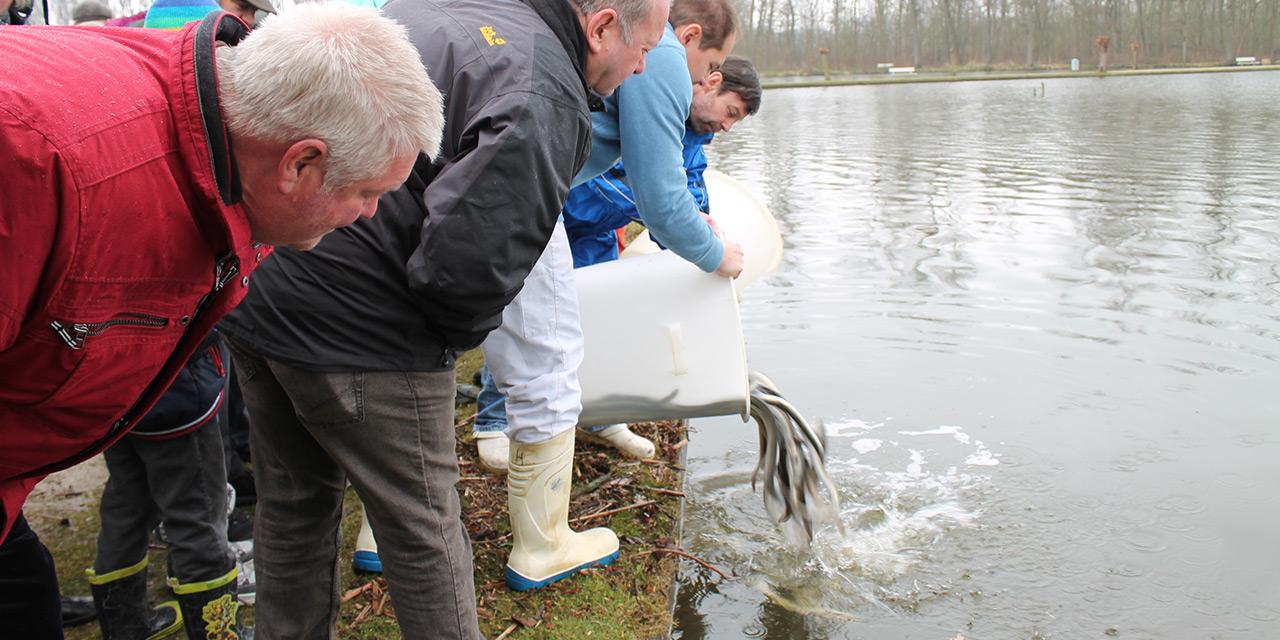 Een groepje mannen op leeftijd staan voorovergebogen aan de waterkant, aandachtig te kijken hoe een van hen jonge paling uitzet in het Donkmeer.
